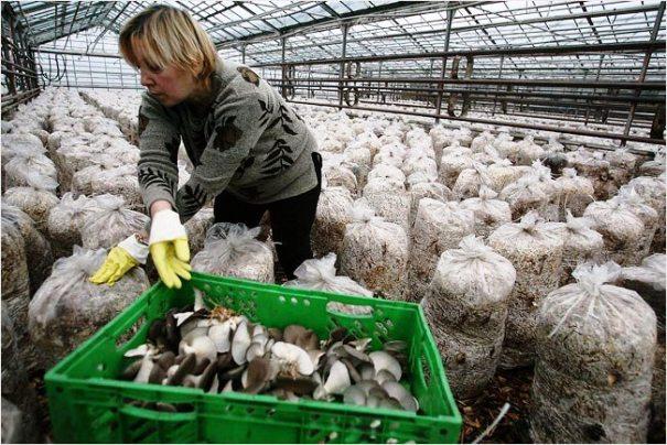 Производство грибов